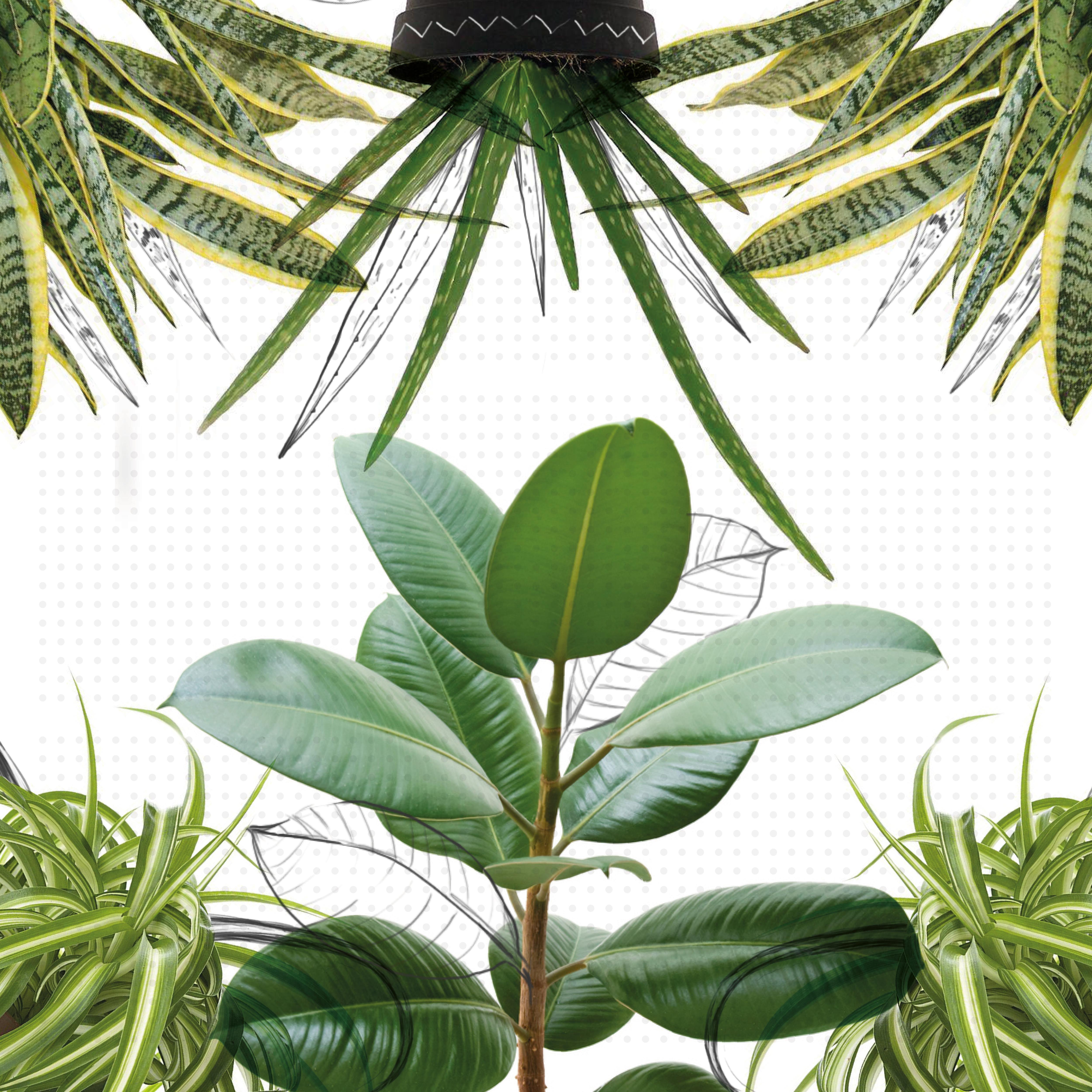 Nombre De Plantas De Interior Fabulous Top Elegant Best Aspidistra