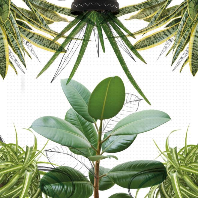 Plantas-01